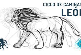 Como animar un ciclo de caminata de un león