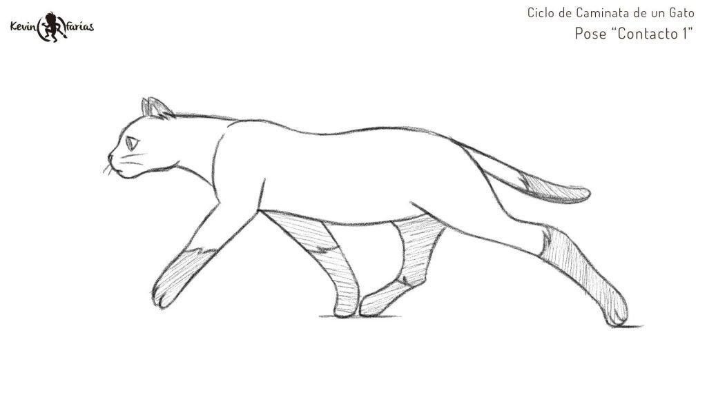 Gato - Pose Contacto 1