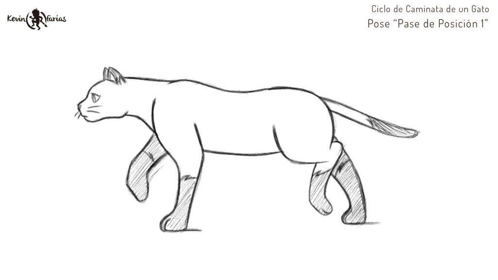 Gato - Pose Pase de Posición 1